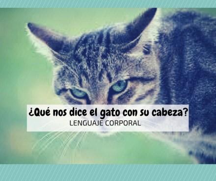 lenguaje corporal gatos cabeza