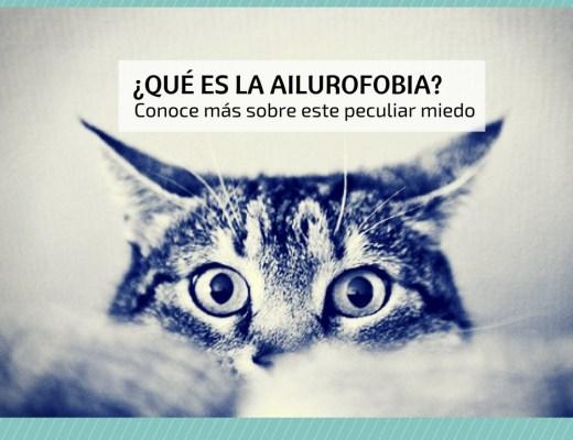 miedo gatos ailurofobia