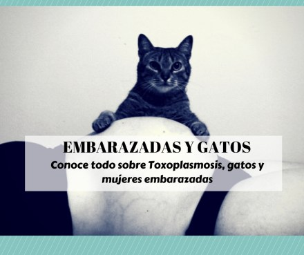 embarazadas gatos toxoplasmosis