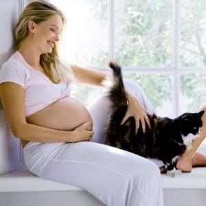 Disfruta del embarazo con tu gato