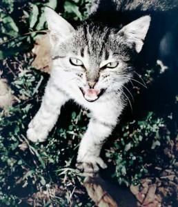 Los maullidos de gato a gato son más intensos que los que van dirigidos a los humanos | Foto: marinstefan.deviantart.com