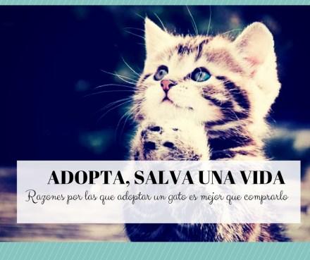 Adoptar gatos mejor que comprar