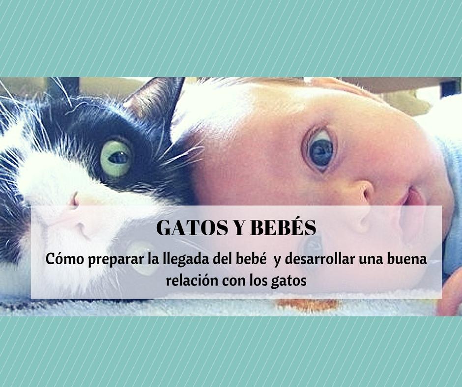 Gatos y beb s reci n nacidos en una misma casa cosas de - Como hacer fotos a bebes en casa ...