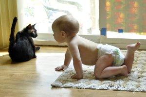 Los primeros acercamientos entre bebé y gato deben ser supervisados por un adulto | Foto: cheslah.deviantart.com