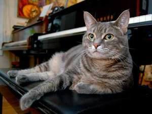 Nora toca tanto sola como cuando le observan | Foto: norathepianocat.com