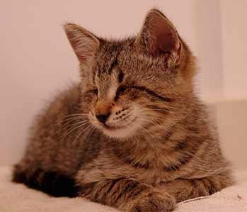 Oskar nació sin los ojos formados | Foto: oskarandklaus.com