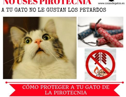 petardos pirotecnia gatos