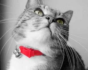 Si tu gato no necesita llevar collar, no se lo pongas | Foto: theskytastesofsugar.deviantart.com/