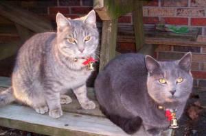 Evita que el collar tenga cascabel, adornos, medallas o elementos molestos y peligrosos para el gato | Foto: latias-eevee.deviantart.com