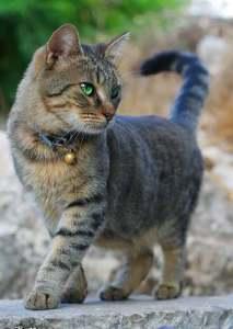 Escoge el collar que menos daño le haga, por su material y su estructura, y colócalo para que sea seguro para el gato | Foto: omer-b-n.deviantart.com/