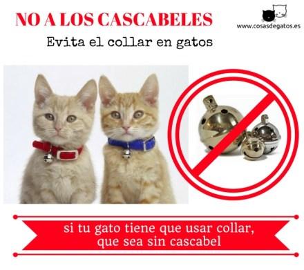 collar gatos