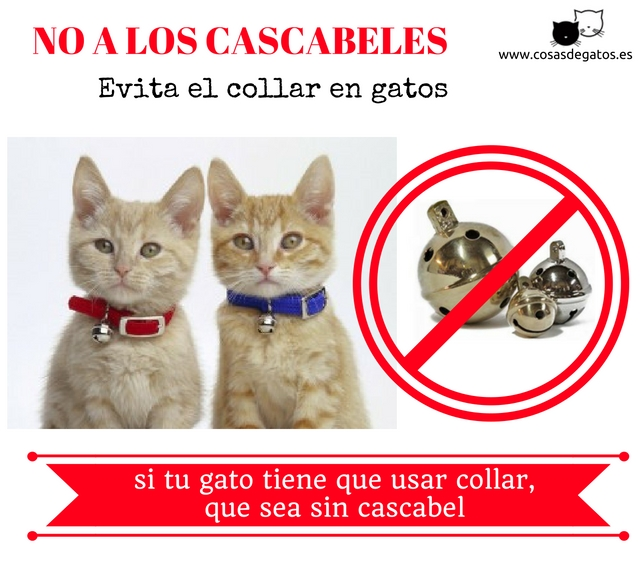 collar gatos