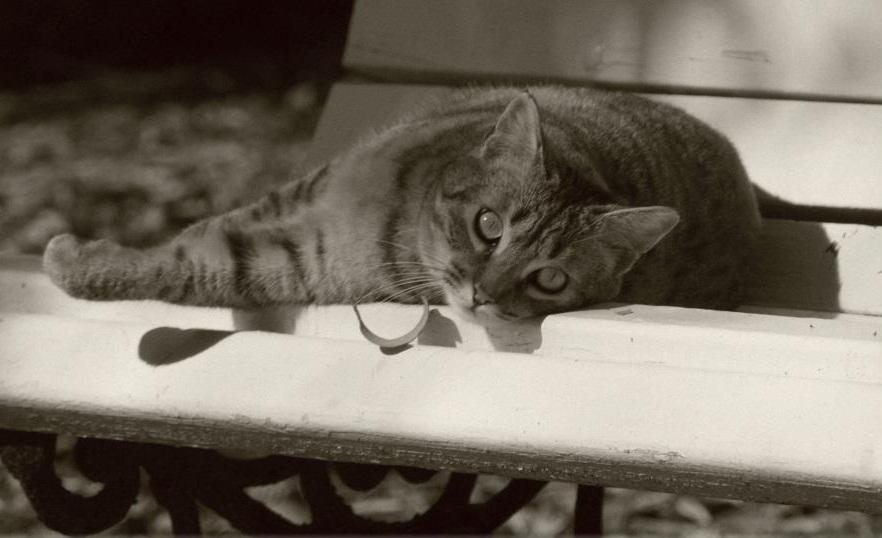 Gatos del jard n bot nico 18 a os cuidando de gatos sin for Ahuyentar gatos del jardin