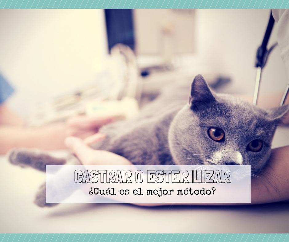 La castración o esterilización de gatos, ¿qué método es mejor ...