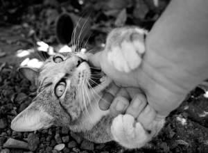 Los gatos pueden morder porque les acostumbramos a ello desde pequeños | Foto: Cat&White cat-n-white.deviantart.com/