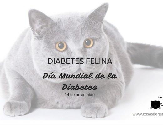 diabetes felina
