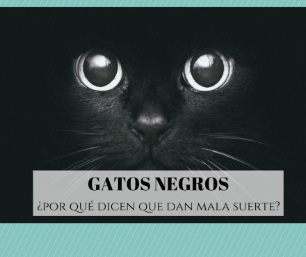 gatos negros y mala suerte