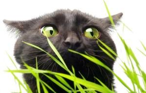 Muchas plantas que tenemos en casa son tóxicas para los gatos