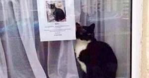 Qué hacer si se pierde tu gato