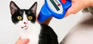 Si un gato se pierde y lleva microchip, gracias al lector se podrá identificar los datos de la familia