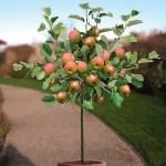 manzano planta tóxica gato | Foto: guiajardineria.com