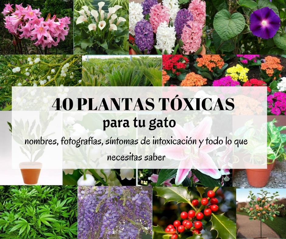 Las 40 plantas m s comunes que son t xicas para gatos for Plantas de interior lengua de gato