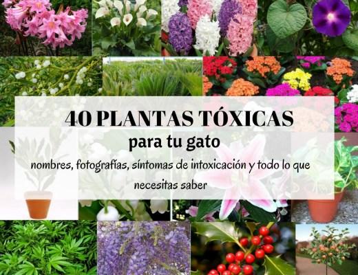 plantas toxicas gatos