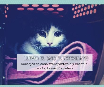 consejos llevar gato veterinario