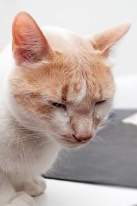 Gato llorando con lágrimas reales