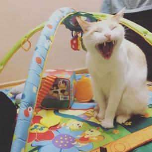 Kato bostezando mientras juega con los juguetes de su hermana bebé