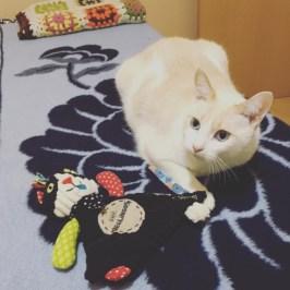 Kato y su juguete