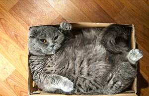 Las cajas son cálidas y eso encanta a los gatos