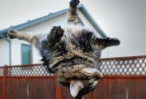 Existen muchas ocasiones y despistes en el que el gato se puede caer de bastante alto