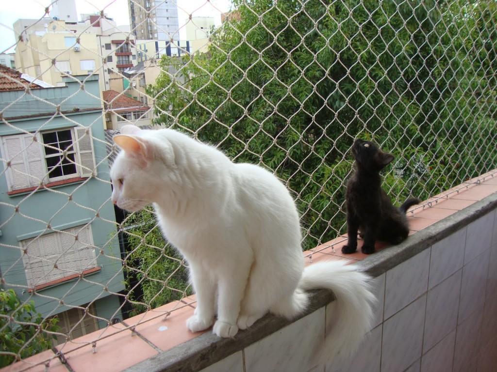 Resultado de imagen de gato caído ventana
