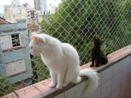 La red flexible debe ser suficientemente resistente y del tamaño adecuado para los gatos