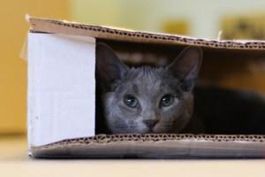 adaptación de la casa para la mudanza de gatos