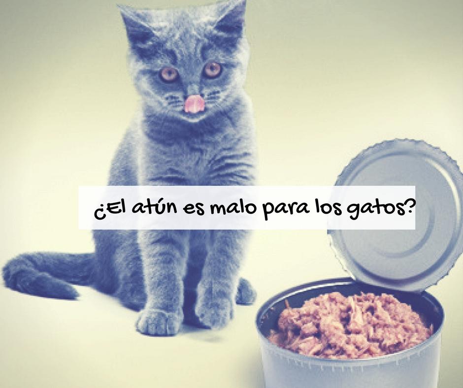 Atún malo o bueno para gatos | Foto: http://pets.webmd.com