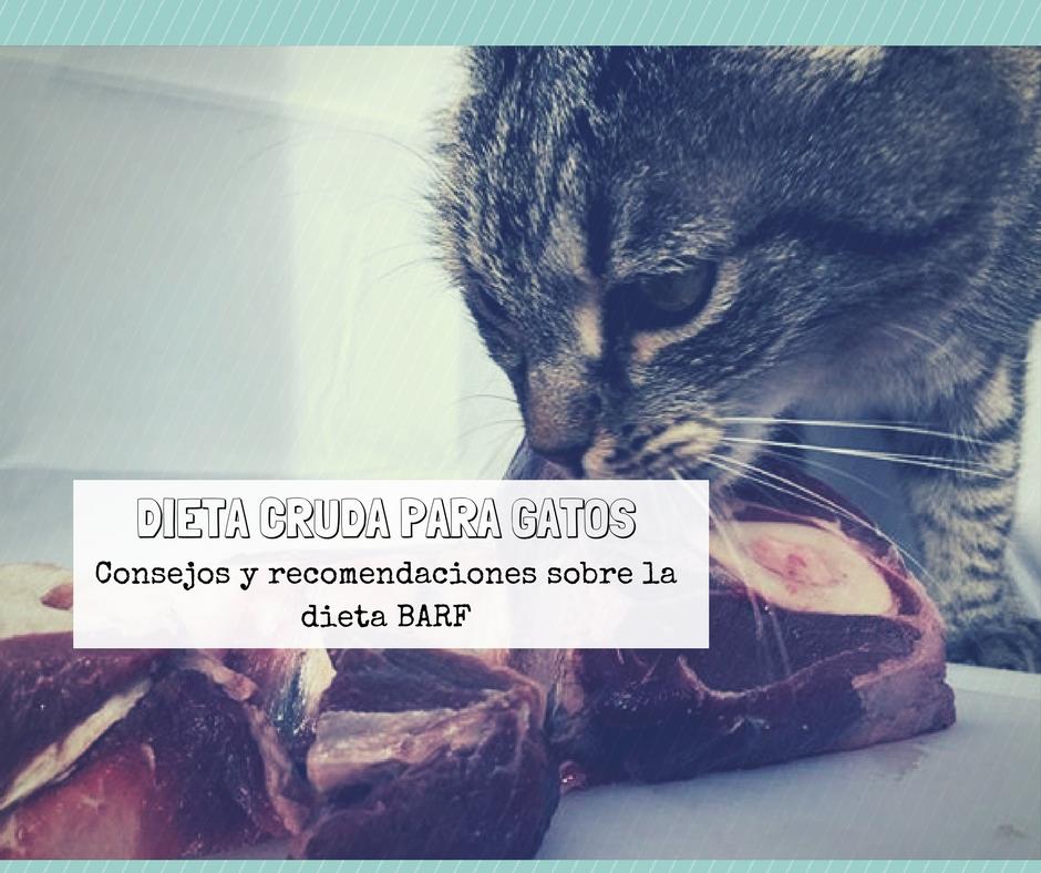 Dieta cruda para gatos BARF | Foto: PuroMenu