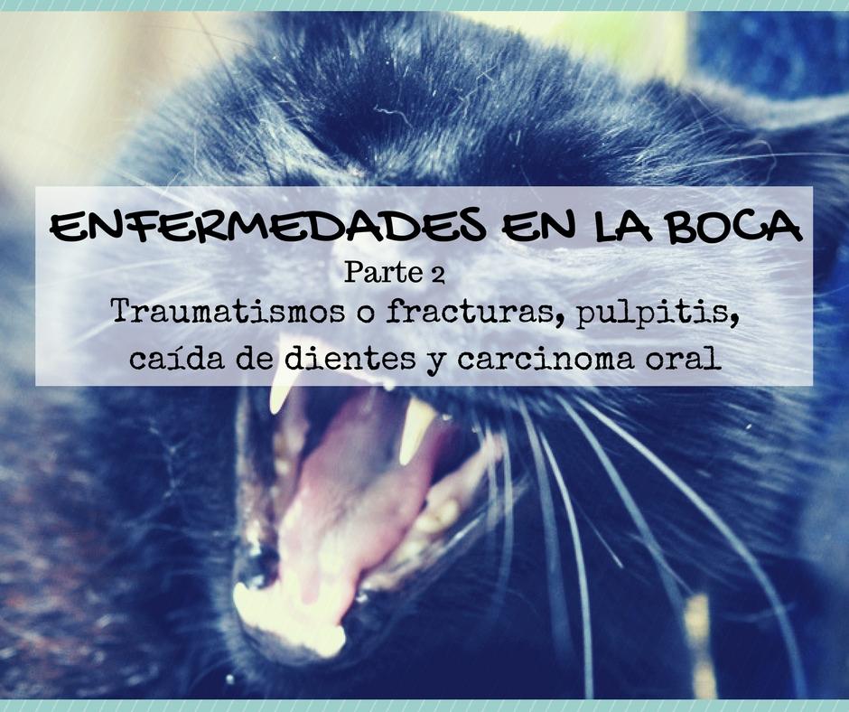 Enfermedad dental gato: traumatismos o fracturas, pulpitis, caída de dientes y carcinoma oral | Foto: Flickr