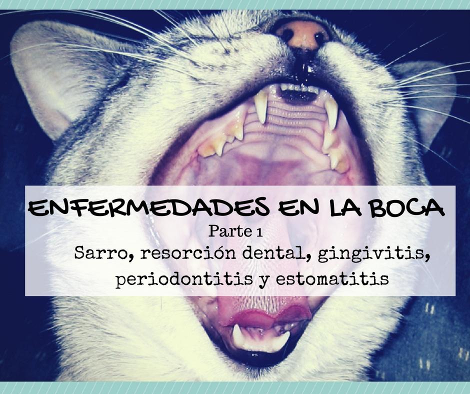 Enfermedades más comunes en la boca de los gatos (parte 1)