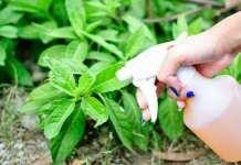 usos del vinagre en el jardin