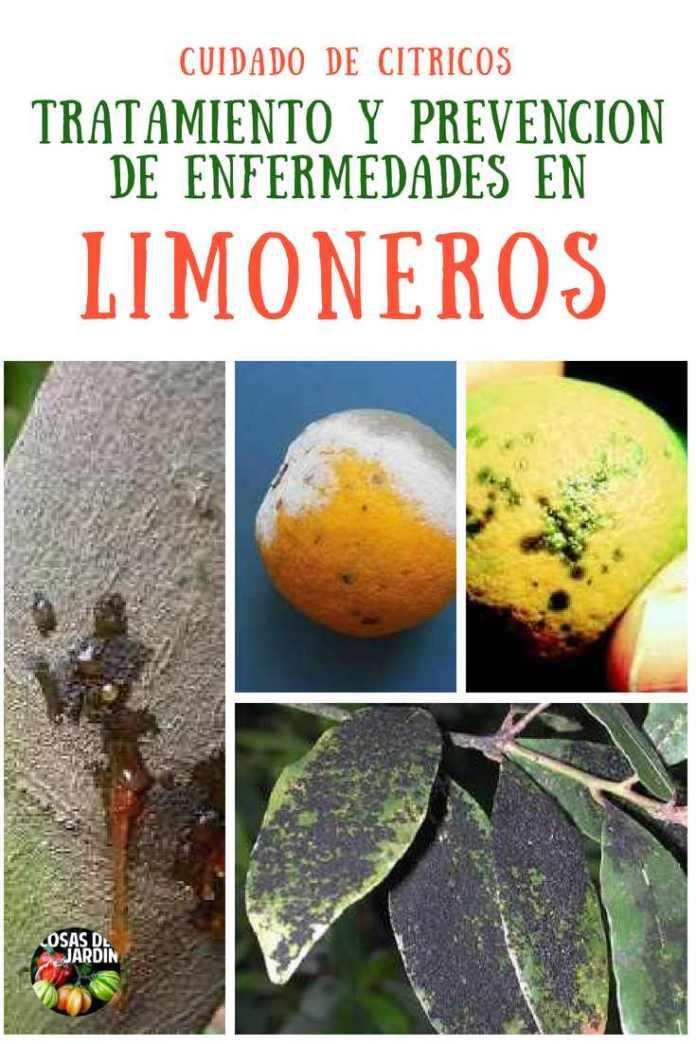 Una guia para identificar enfermedades de limoenros, cual es el tratamiento y prevencion. #Jardin #Jardinería #Huerto #Huertourbano