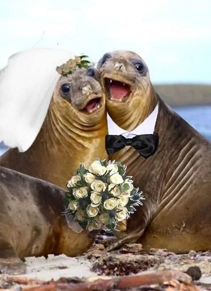 La foca sposina