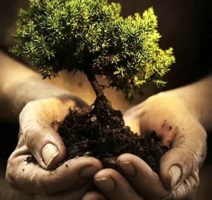 il-cuore-delle-piante3