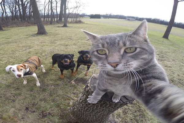 cats with dogs in an image