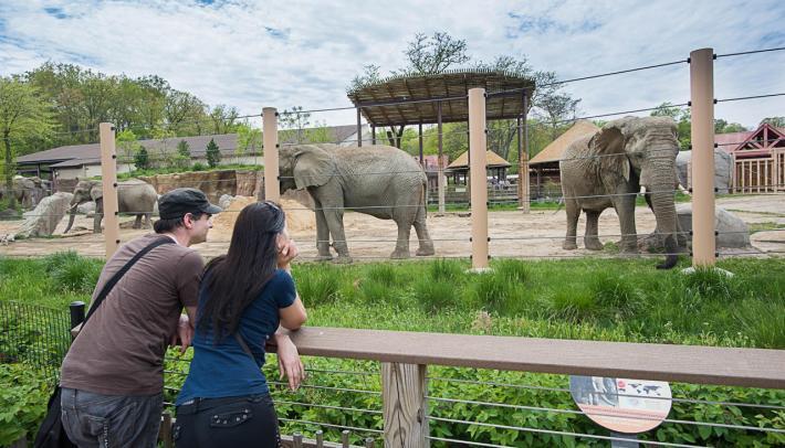zoo captions
