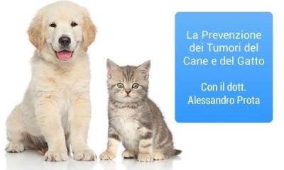 cane e gatto tumori
