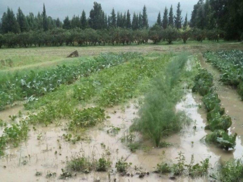 LA PRIMAVERA NERA DELL'AGRICOLTURA ITALIANA