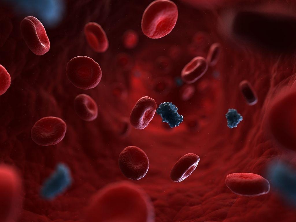Insulin. Computer artwork of molecules of insulin circulating in the blood stream.