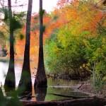 LeFleur's Bluff State Park, Jackson MS